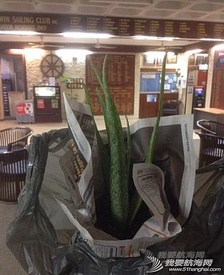 农业部,sailing,达尔文,人情味,香港 6月2日,芦荟。船上唯一的植物,被澳洲检疫的农业部老头收走时,宏岩伤心哭了。
