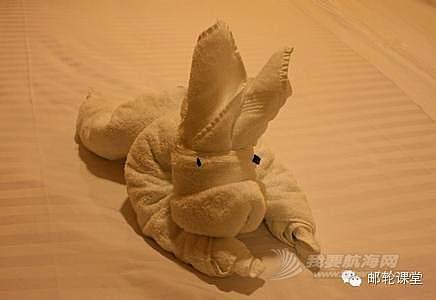 不明生物,鸭嘴兽,图片,朋友,搞怪 邮轮毛巾绝技:搞怪生物大盘点