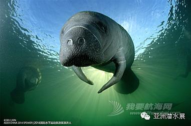 China,上海,亚洲,潜水 ADEX China亚洲潜水展--上海潜展召集令
