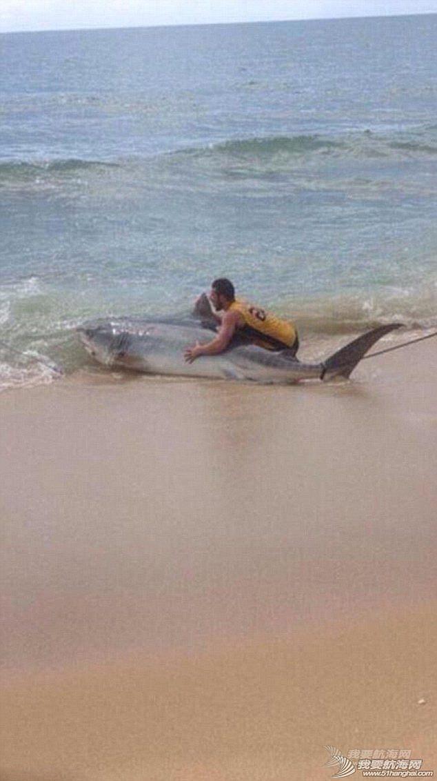 男子钓到4米长虎鲨