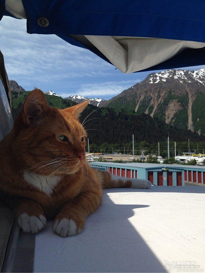 北美13姨连载-004-我的Kitty猫也适应了船上的生活,期待将来不会晕船