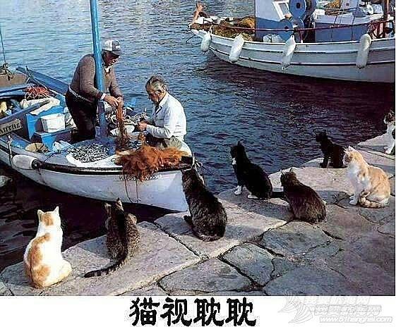 cat的航海日志之(我就是那只天天看着帆船的猫)1章节