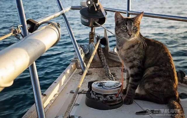 红妆爱武装,小猫,帆船 cat的航海日志之(菜鸟版)2章节