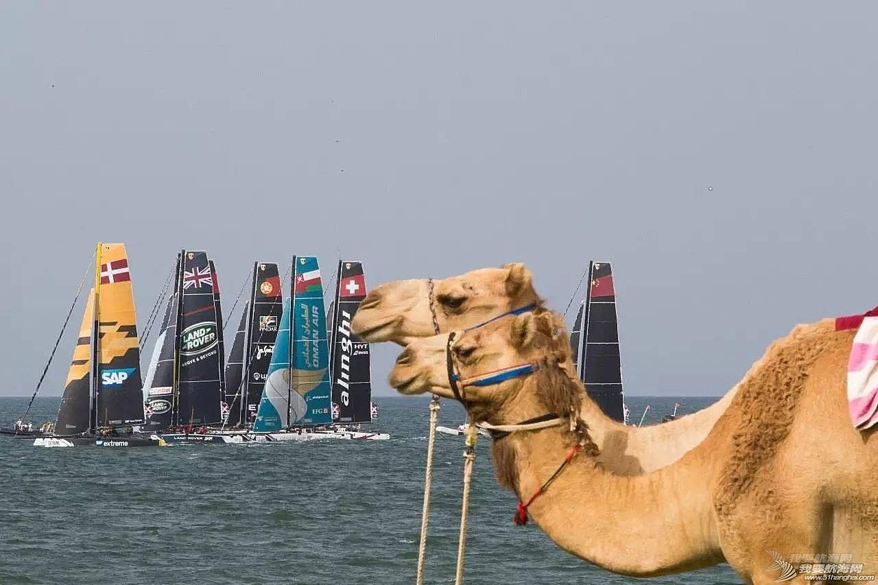 骆驼老兄都来观战GC32,你还不来看极限帆船赛吗?