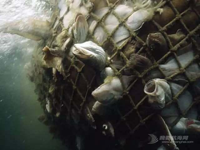 公益 | 再不加以重视,30年后我们或无鱼可吃