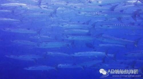 我们,潜水,航海,那的,就是 AD航海团 帆船游记13:不舍得离开的天堂渔港仙本那  231243p22315f8to79p95p