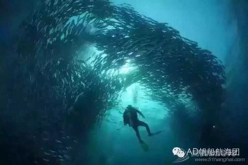 我们,潜水,航海,那的,就是 AD航海团 帆船游记13:不舍得离开的天堂渔港仙本那  231258wzzae8a0peb8mdh8