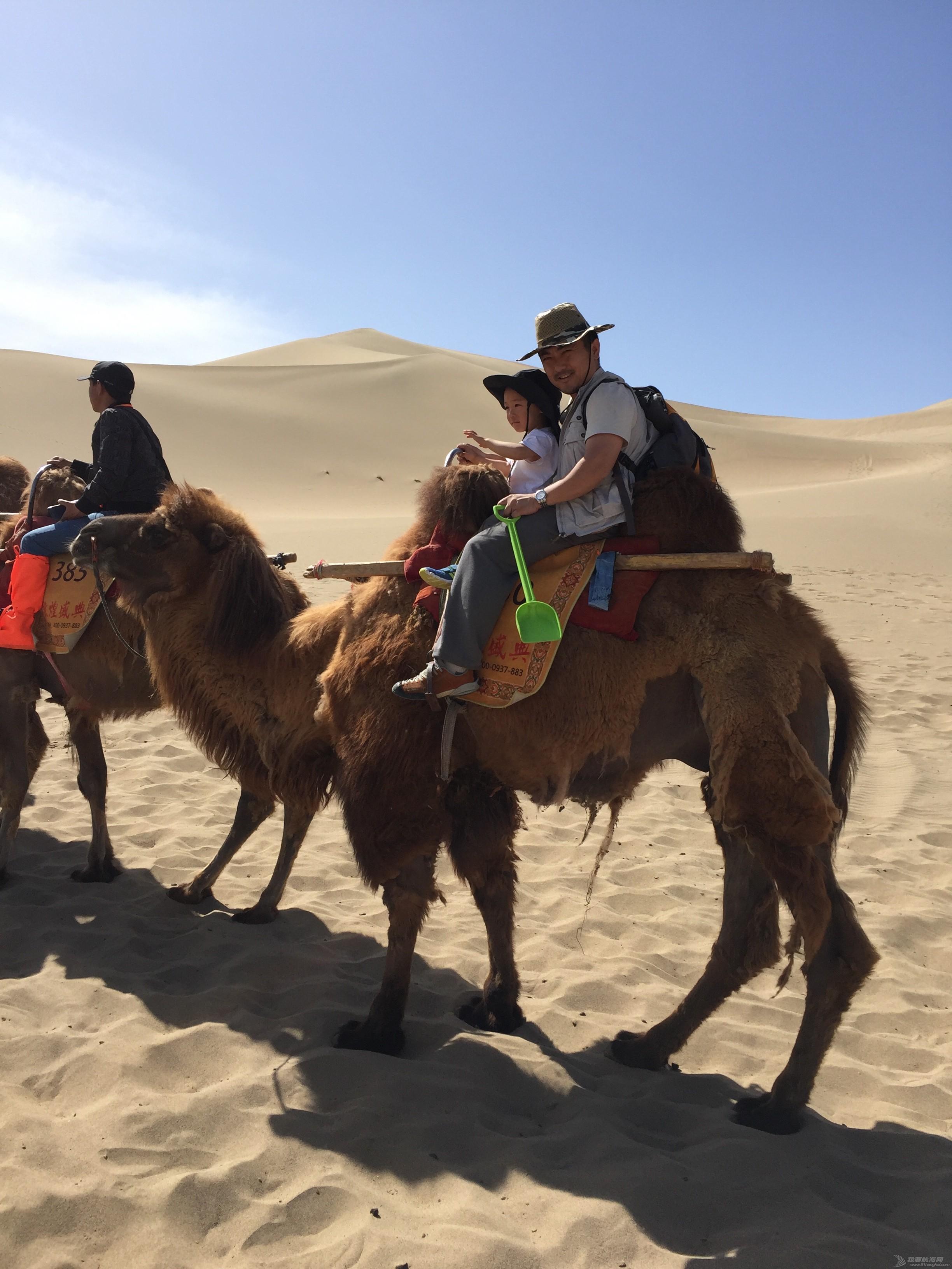 苟且,我们,船长,一个人,远方 2016-CCOR纪实:生活不止眼前的苟且,还有诗和远方的大海 大骆驼