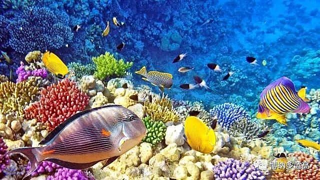天泽游艇|穿梭醉美海岛和爪哇秘境,蓝高450上的印尼假期