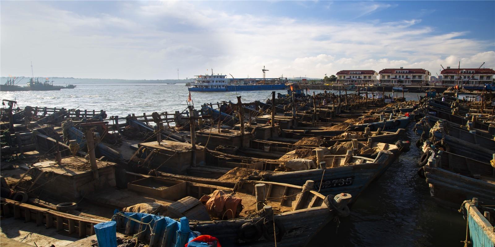 2018年8青岛红岛蛤蜊大丰收,每天都有十万余斤蛤蜊上岸。