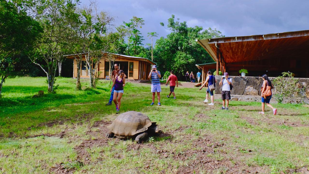 20180330加拉帕戈斯巨大的象龟.jpg