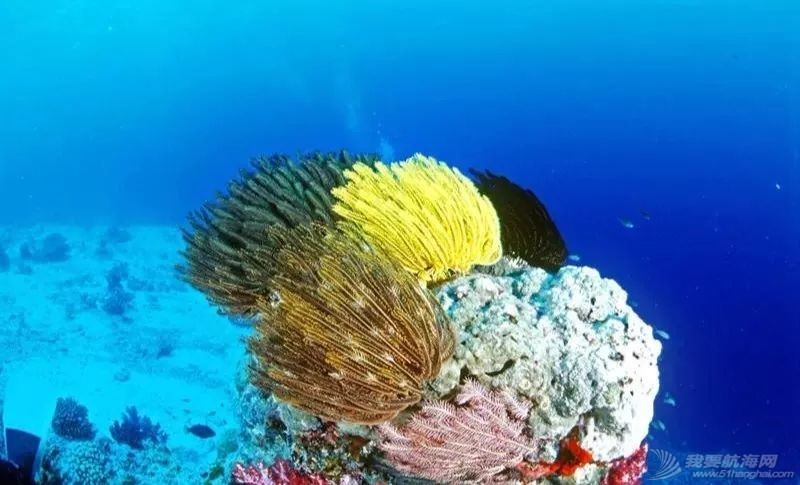 十一泰国普吉岛驾驶帆船跳岛潜水及ASA101,103国际船员班招生w10.jpg