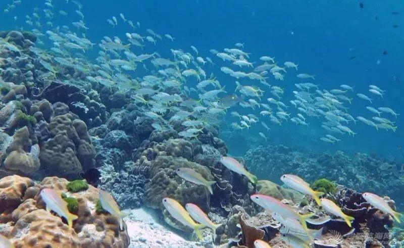 十一泰国普吉岛驾驶帆船跳岛潜水及ASA101,103国际船员班招生w12.jpg