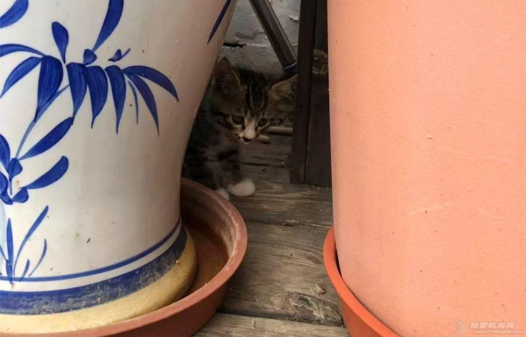 """一只名叫""""油腻赛福""""的猫w3.jpg"""