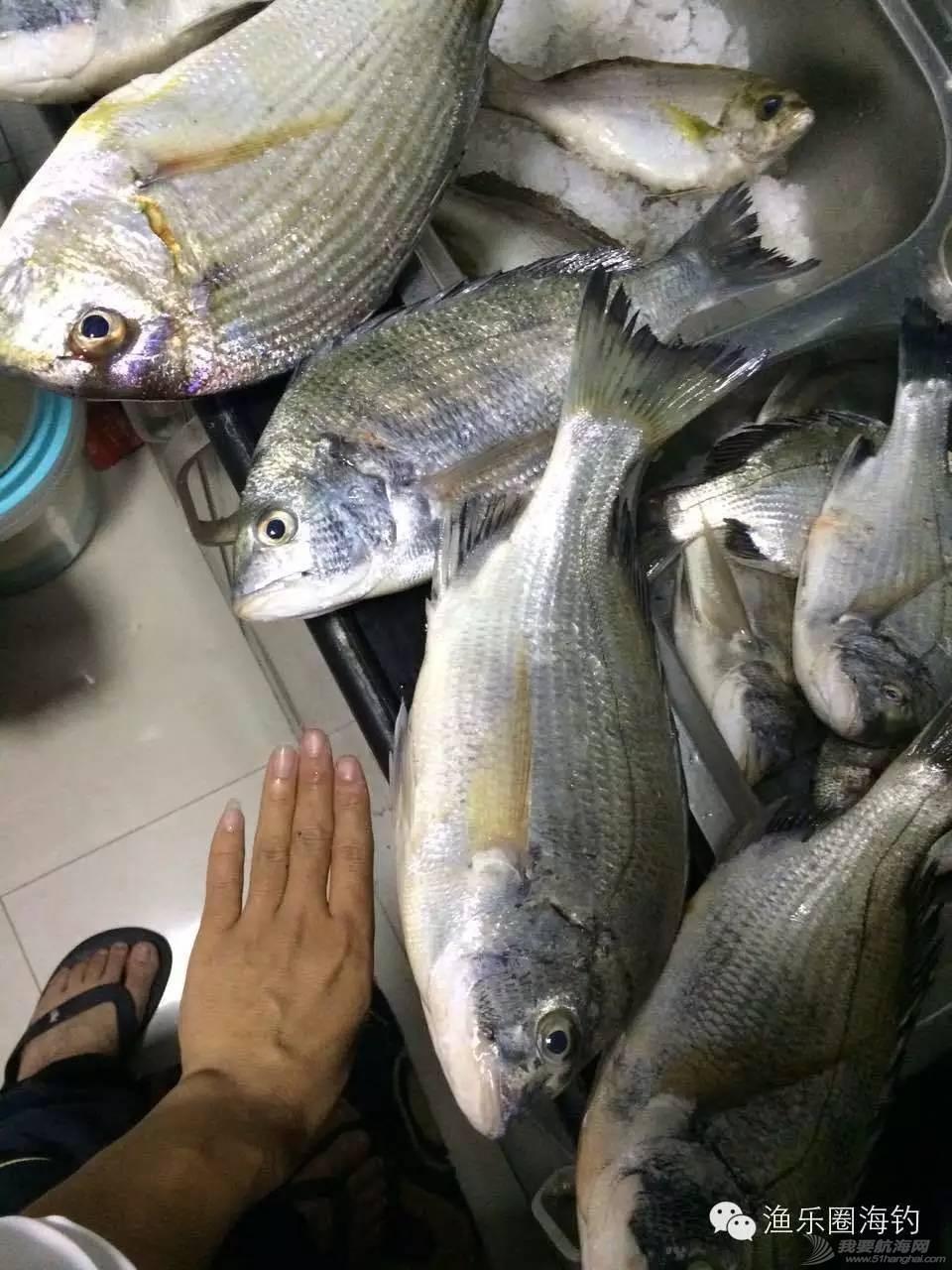 渔乐圈钓友周末渔获精选w5.jpg