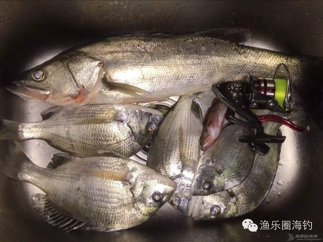 渔乐圈钓友近期渔获精选w5.jpg