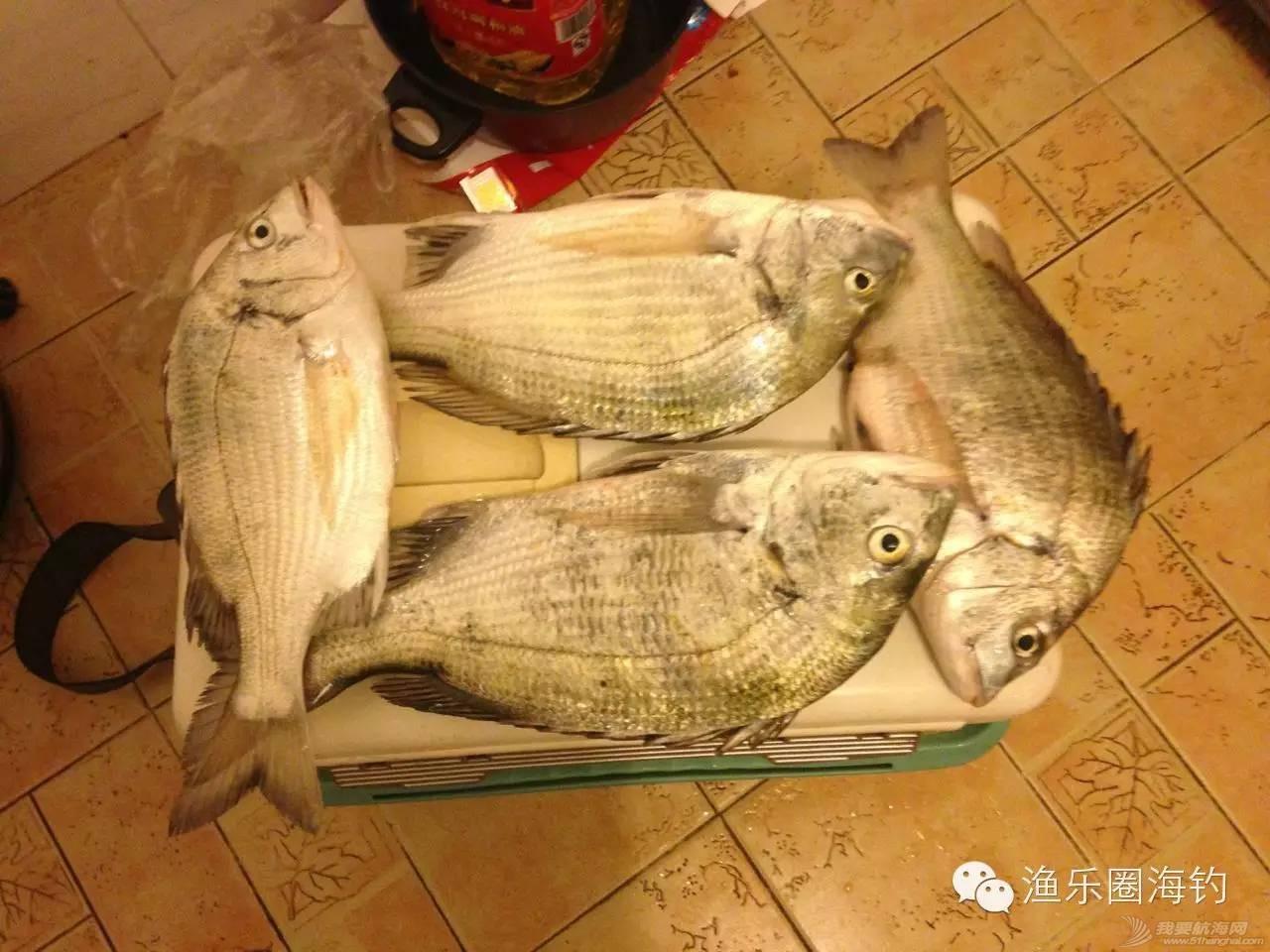 渔乐圈钓友近期渔获精选w7.jpg