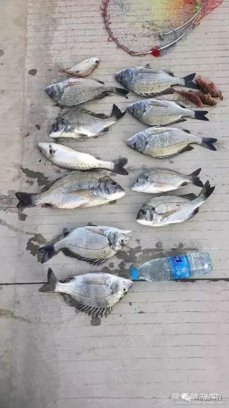 渔乐圈海钓成员近期渔获精选.w12.jpg