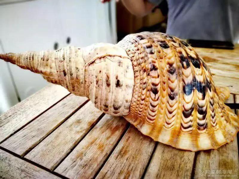 巴新奇遇:用两罐啤酒救下一只海龟,还收编了一个岛的兄弟w72.jpg