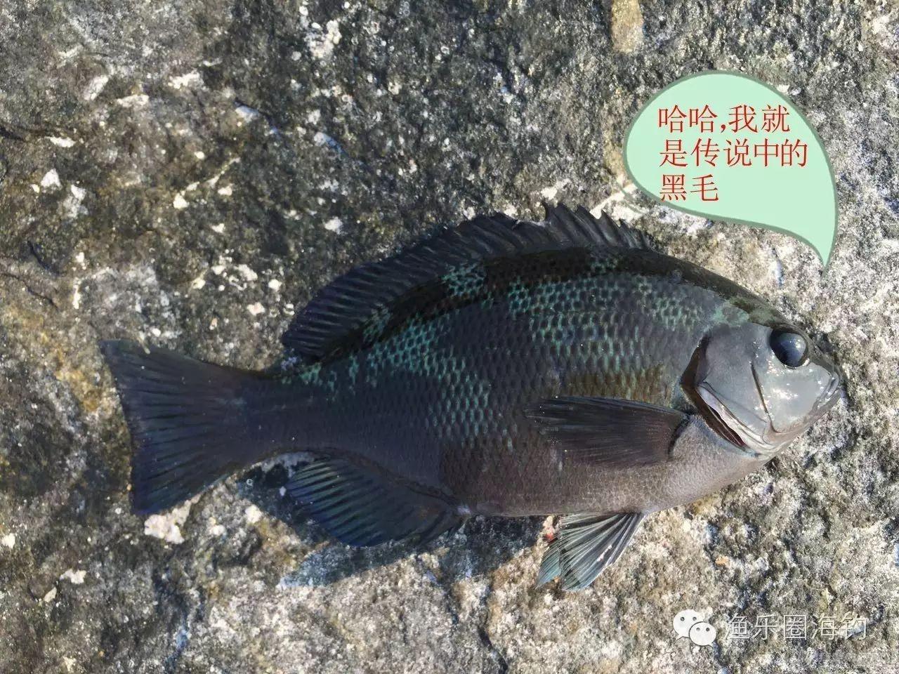 渔乐圈钓友首战美丽的东庠岛w15.jpg