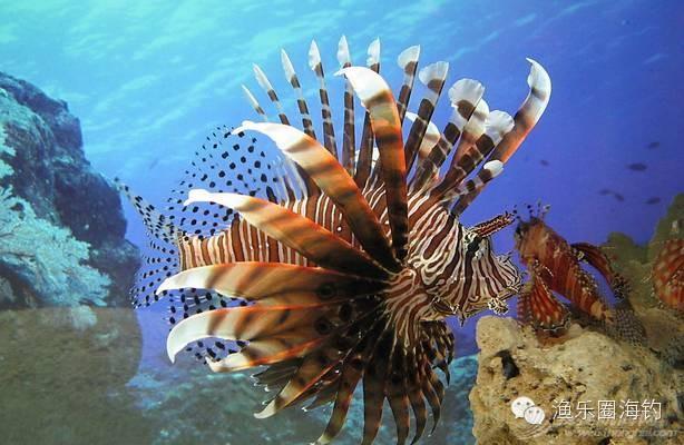 海钓中常见的毒鱼w6.jpg