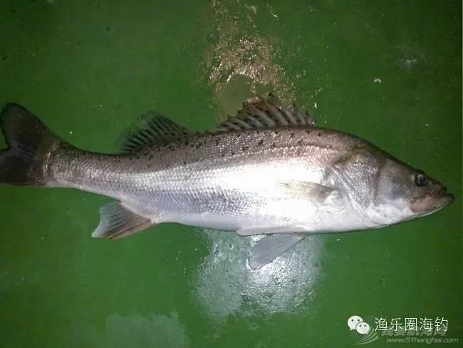 各种常见海鱼的营养价值.w4.jpg