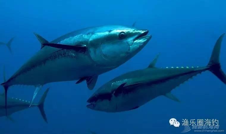 各种常见海鱼的营养价值.w5.jpg