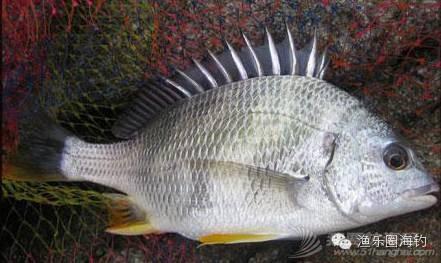 各种常见海鱼的营养价值.w2.jpg