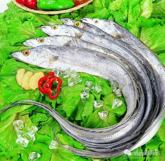 各种常见海鱼的营养价值.w7.jpg