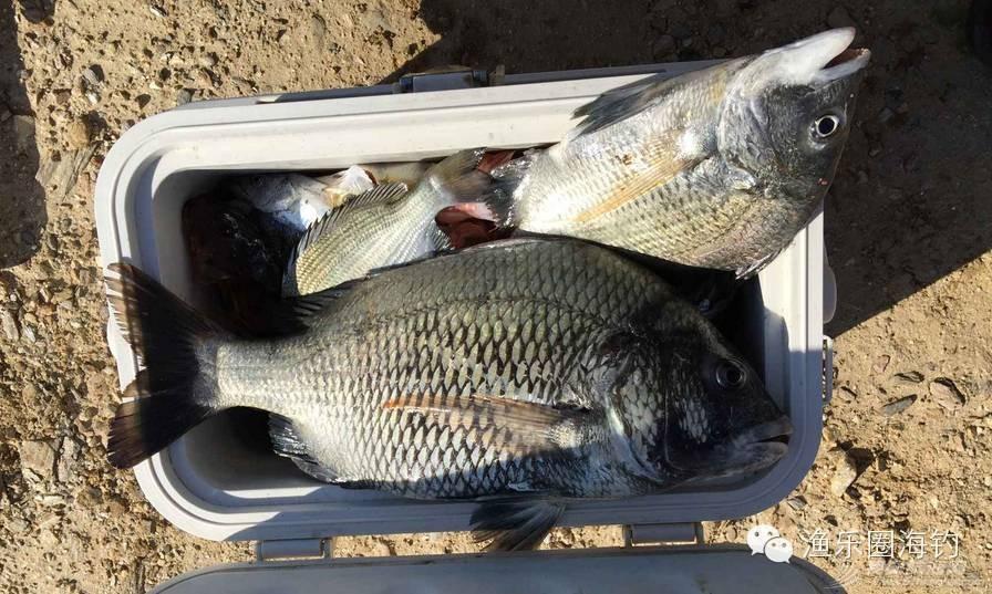 【渔乐头条】--渔乐圈钓友再战东山w9.jpg