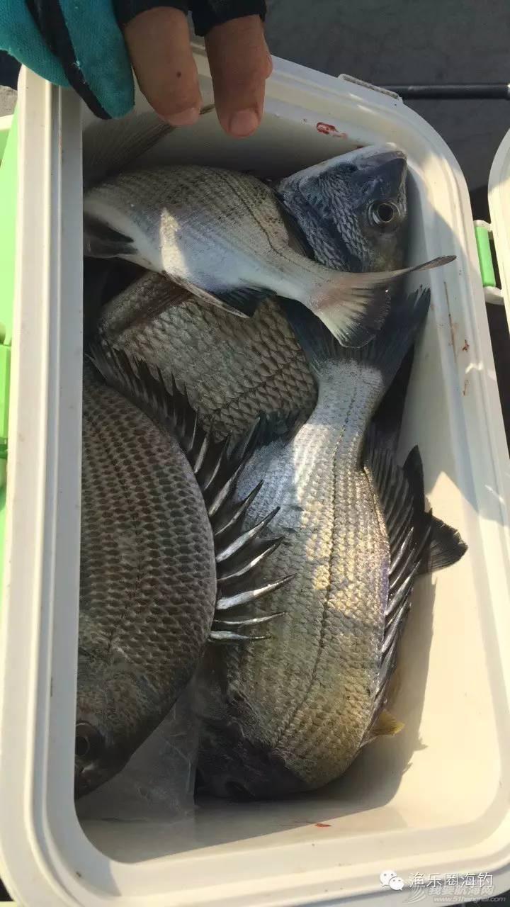 矶钓的季节到了,鱼的个头都比较大.w5.jpg