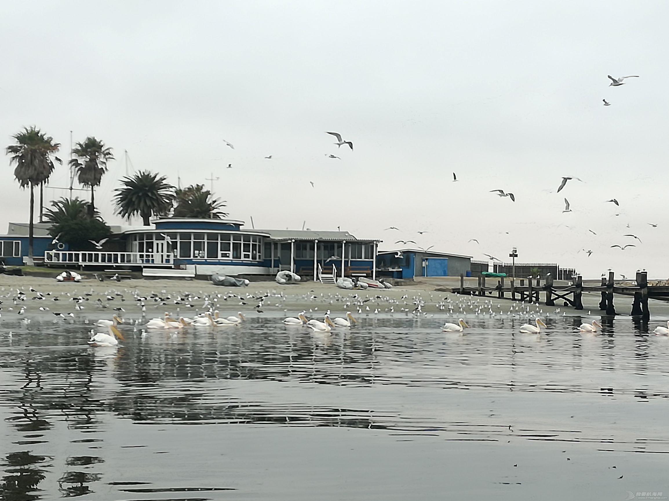 16 birds at Wavis bay club.jpg
