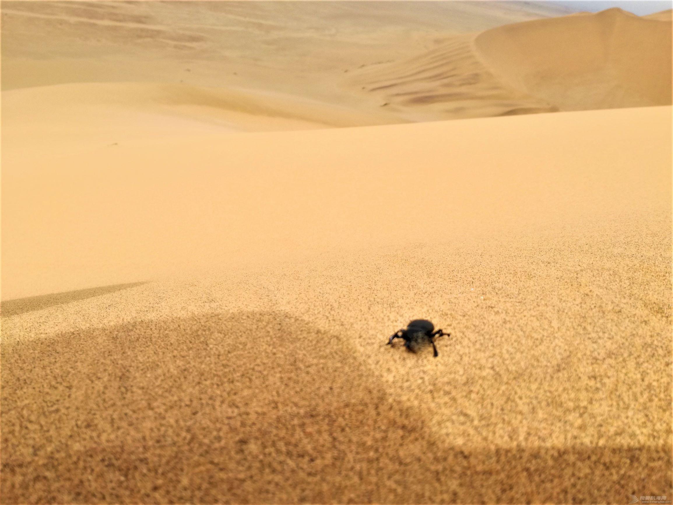 17 dune 7 a beetle.jpg