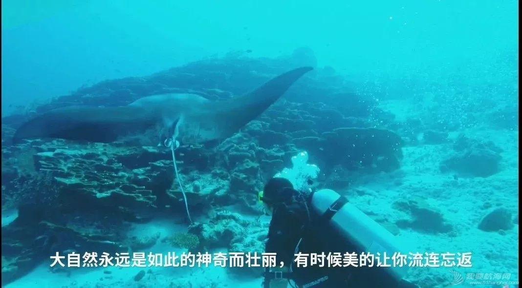 舍利塔下的虎鲨吃人吗?w67.jpg