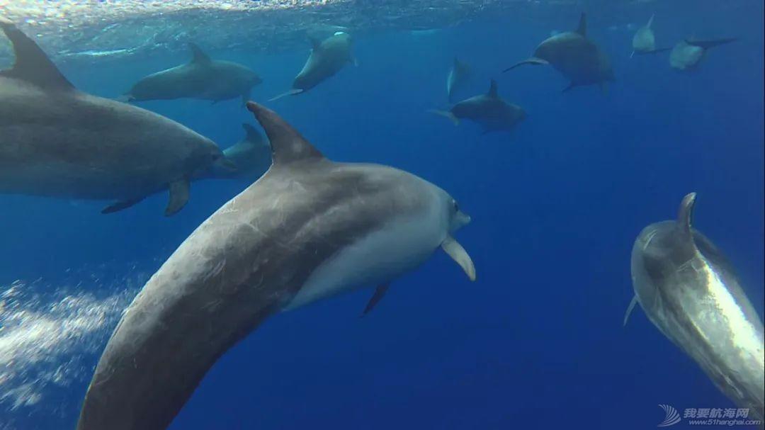 世界海洋日:赛事合作伙伴可持续发展策略一撇w2.jpg
