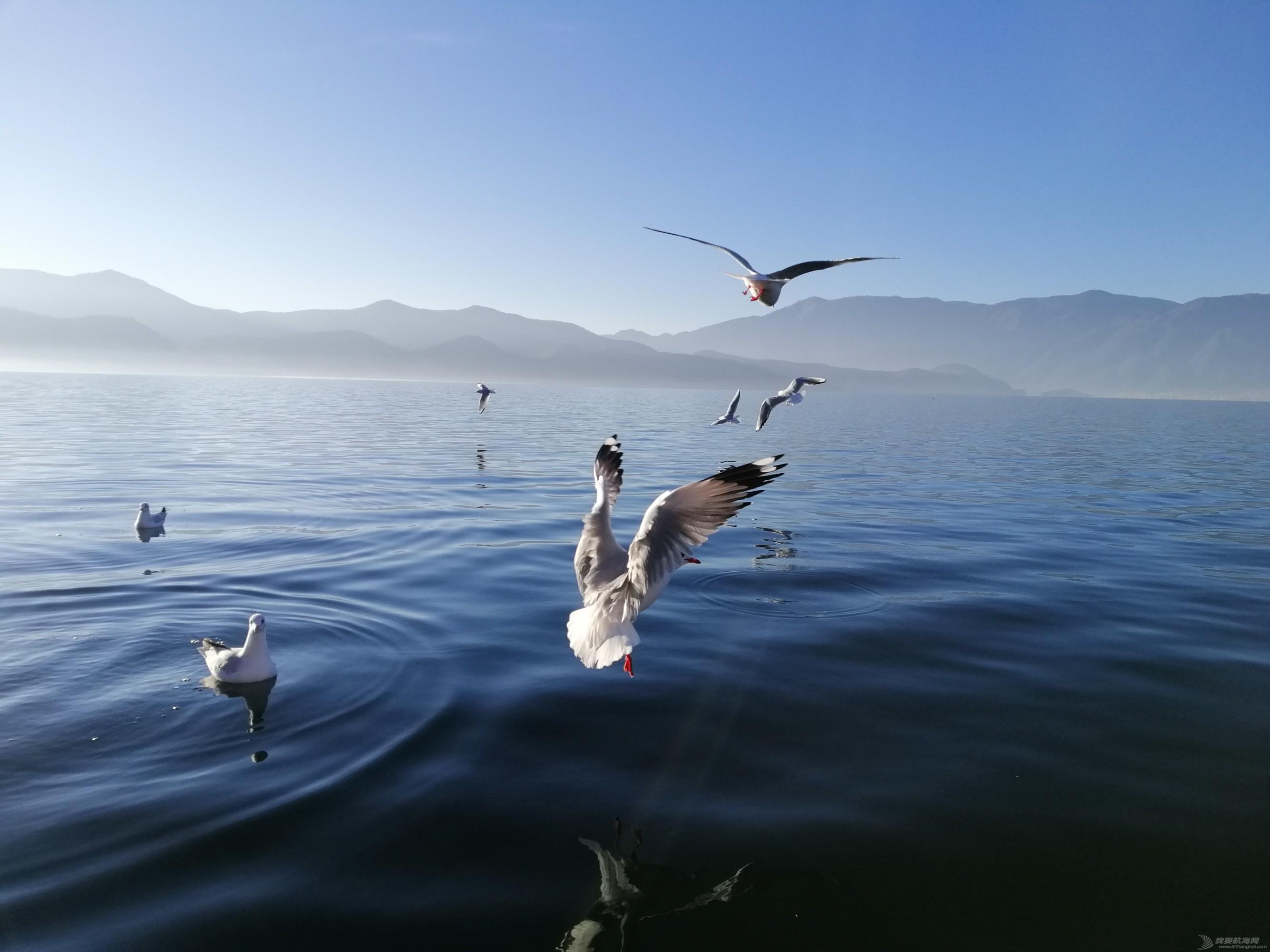 泸沽湖鸥4.jpg